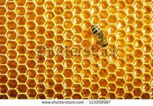 stock-photo-bees-work-on-honeycomb-113350987-1